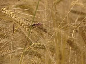 poljoprivrednogospodarstvo